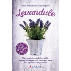 Levandule - Vše, co nutně potřebujete vědět...